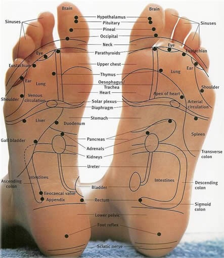Body systems are mapped on the feet